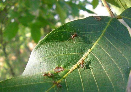 Pest Control Recipe