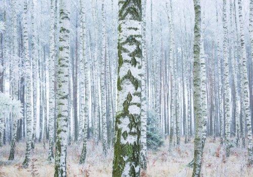 Enhancing Winter Landscaping