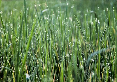 Fred's 8 Tips for Summer Lawn Care